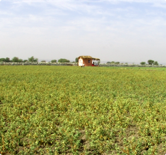 Good Agricultural And Collection Practices (GACP)
